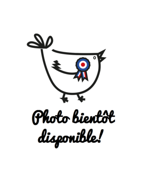 Poule-race-francaise-traditionnelle-bientot-disponible